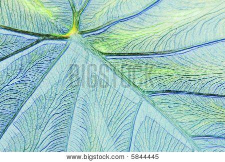 Leaf close-up in pastels