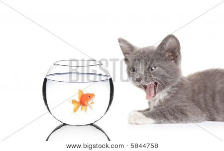 Cat and a fish in a fish bowl
