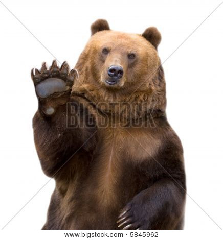 The Brown Bear Welcomes (ursus Arctos).
