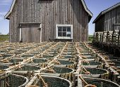 stock photo of lobster trap  - Row of lobster traps in Prince Edward Island - JPG