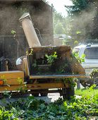 stock photo of arborist  - Wood Chipper Shredding a Tree into a Truck - JPG