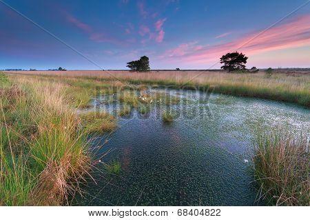 Beautiful Pink Sunrise Over Swamp
