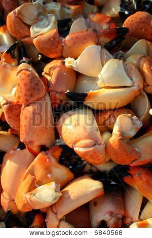 Crab claws background