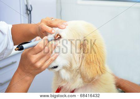 Vet Checking puppy dogs eyes
