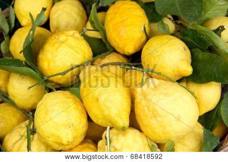 Sorrento Lemons On The Market