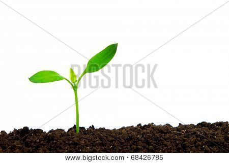 Little green plant isolated on white background