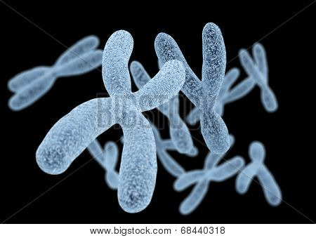 Chromosomes On Black Background