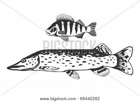 Fish Predators Set
