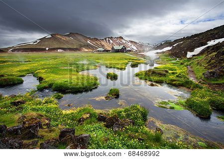 Small river and fresh blooming flowers near thermal springs in Landmannalaugar, Iceland
