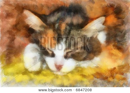 illustration sleeping cat