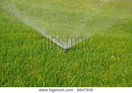 Aspersor de grama