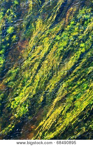 algae in river