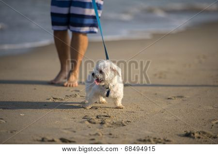 A cute Dog running on the Beach