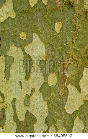 Tree Bark, Background, Texture