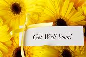 stock photo of get well soon  - Get Well Soon message card with yellow gerberas - JPG
