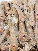 stock photo of locust  - Cicale di mare  - JPG