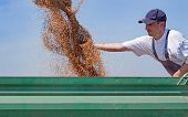 picture of tractor-trailer  - Young farmer checks his wheat flow while combine harvester unloads wheat into tractor trailer - JPG