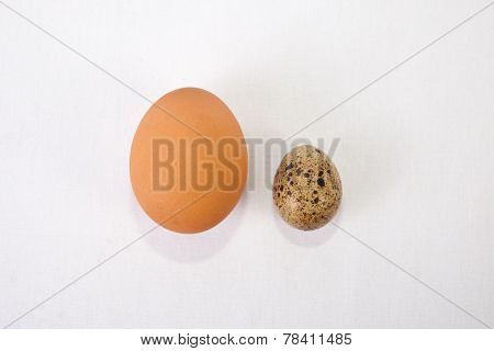 Quail Eggs With An Big Chicken One