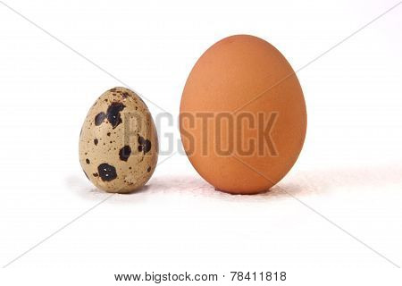 Quail Egg With An Big Chicken One