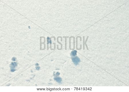 Fresh snow texture on a sunny day