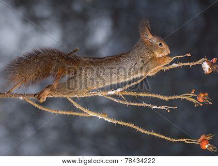 Squirrel Sticky Jump