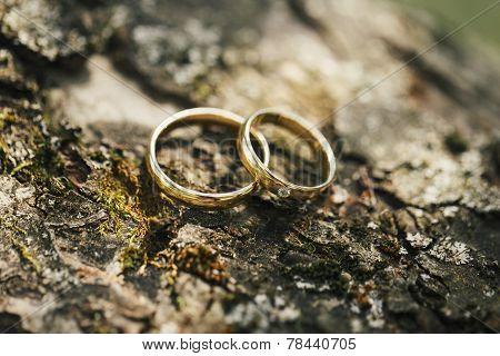 Gold Wedding Rings On Tree Bark