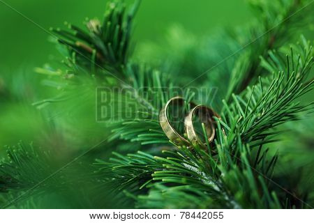 Rings On A Tree Branch