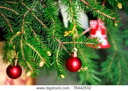 Brunch Fir Tree with young cone in vase