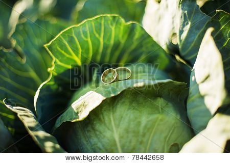 Rings On Cabbage