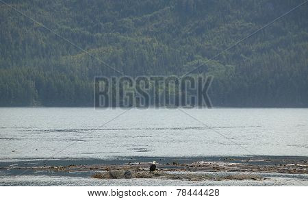 Landscape With Bald Eagle. Vancouver. Canada