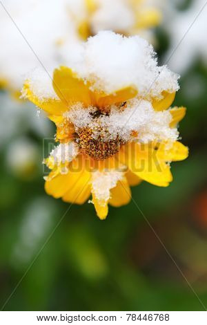 Snow On Flower
