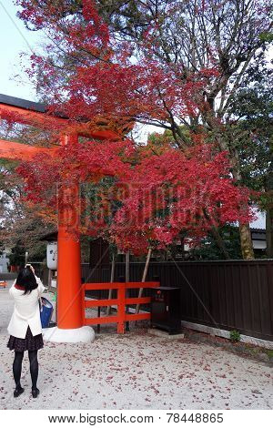 Tourists Visit Shimogamo Shrine Orange Archway In Kyoto