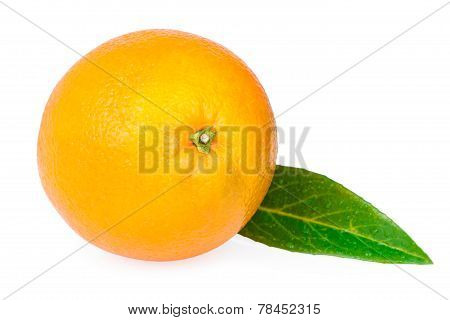 one orange fruit green leaf