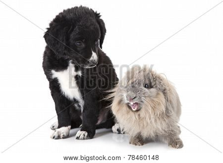 Puppy And Rabbit Over White