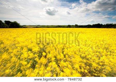 Wind In The Yellow Field