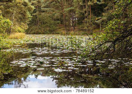 Hidden Pond In The Kampense Heide