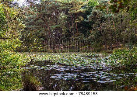Hidden Water In The Kampense Heide