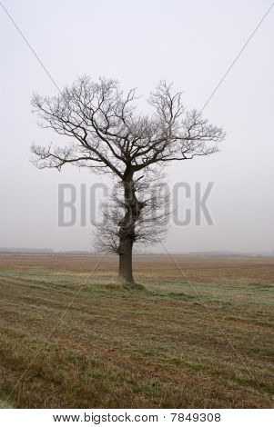 Lonely Tree On Plough Land