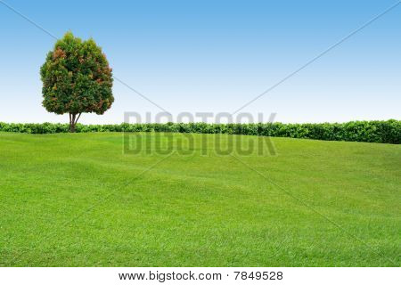 Grass And Tree On Clear Sky