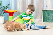 stock photo of child feeding  - child boy feeding red cat at home - JPG