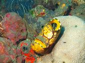 picture of squirt  - The surprising underwater world of the Bali basin - JPG