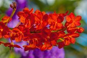 stock photo of orquidea  - A branch of red orchid in the garden - JPG