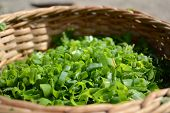 foto of greenery  - juicy greenery is cut and build in a basket - JPG