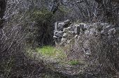 pic of dartmouth  - Old stone wall that once separated fields is now buried deep in woods - JPG