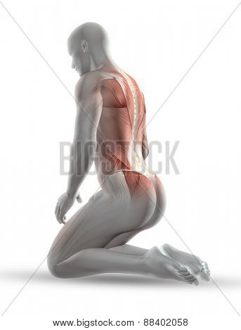 3D render of a male medical figure with partial muscle map in kneeling position