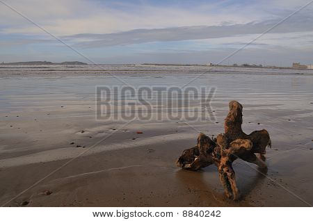 Wood at the Beach