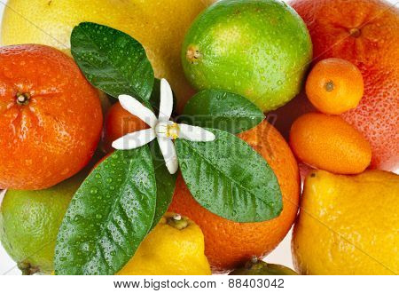 Ripe Beautiful citrus fruits mixed close up  top view background