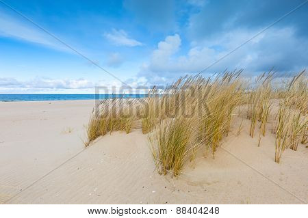 Sea Shore With Grass. Beautiful Landscape