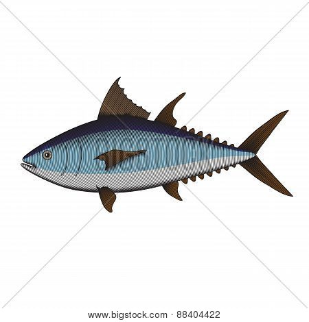 Illustration Of A Tuna Fish In Woodcut Style