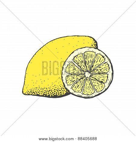 Hand Drawn Vintage Style Lemon And A Segment Of Lemon